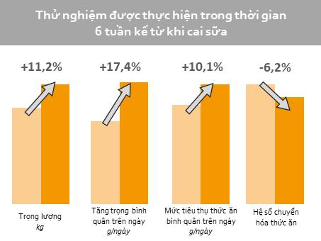 Thu nghiem thay the khang sinh tren heo con tai