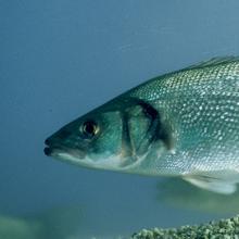 Metier Aquaculture Techna
