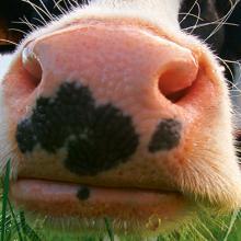 Metier specialites animales Techna museau vache