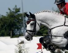 Solutions pour la nutrition et les soins du cheval.