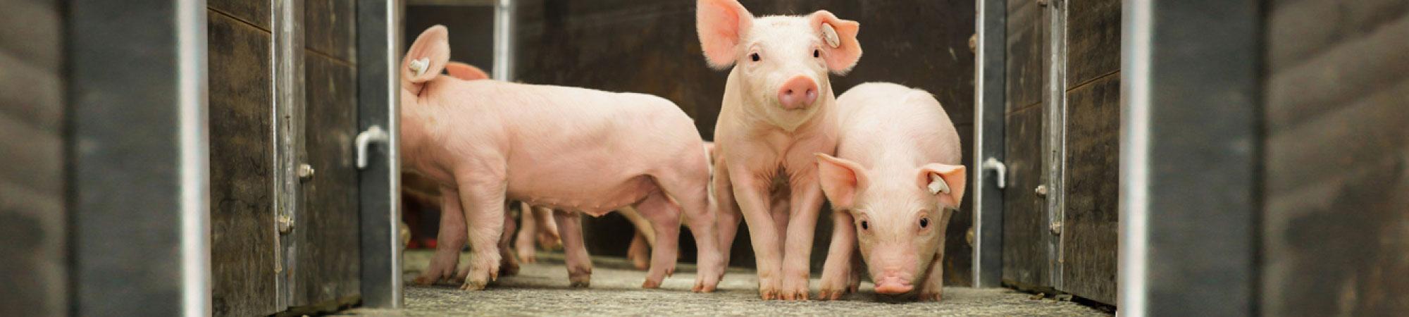 Services de porc